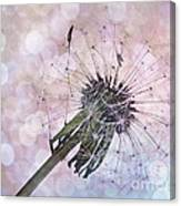 Dandelion Before Pretty Bokeh Canvas Print