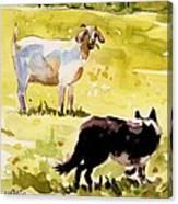 Dandelion Greens Canvas Print