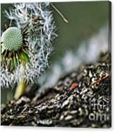 Dandelion In The Wind Canvas Print