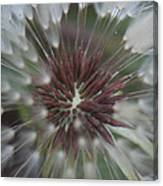 Dandelion Macro Canvas Print