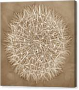 Dandelion Marco Abstract Brown Canvas Print