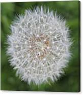 Dandelion Marco Abstract Canvas Print