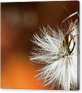 Dandelion Seed Head And Fall Color Background Canvas Print
