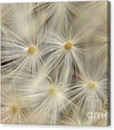 Dandelion Seed Head Macro Iv Canvas Print