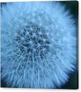 Dandelion Softness Canvas Print
