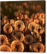 Dandelion Sparkles Canvas Print