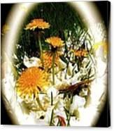 Dandelion Time Canvas Print