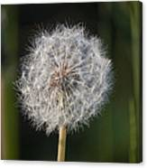 Dandelion With Abstract Grasses Canvas Print