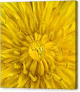 Dandelion With Waterdrop Canvas Print