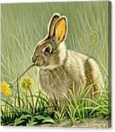 Dandi-nibbler Canvas Print