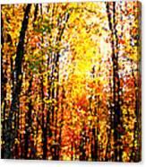 Dappled Sunlight Canvas Print