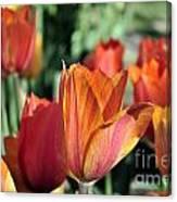 Darby's Tulip 5161 Canvas Print