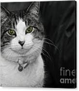 Dare To Look Into My Green Eyes Canvas Print