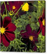 Dark Coreopsis' Canvas Print
