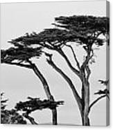 Dark Cypress Canvas Print