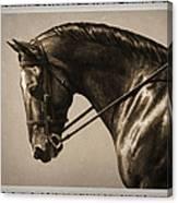 Dark Dressage Horse Old Photo Fx Canvas Print
