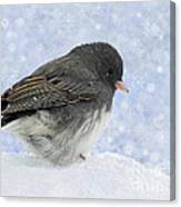 Dark Eyed Junco - Digital Snowflakes Canvas Print
