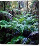 Dark Ferns Canvas Print
