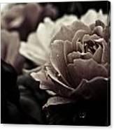 Dark Flower 20 Canvas Print