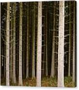 Dark Forest At Kielder Canvas Print