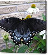 Dark Form Female Tiger Swallowtail Canvas Print