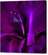 Dark Knight Purple Gladiola Flower Canvas Print