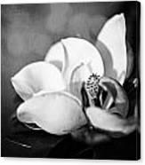 Dark Magnolia Canvas Print