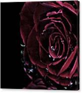 Dark Rose 2 Canvas Print