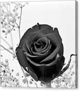Dark Rose Sq Canvas Print