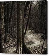 Dark Winding Path Canvas Print
