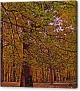 Darker Textured Autumn Trees Canvas Print