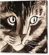 Darling Cat Canvas Print