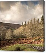 Dartmoor View Canvas Print