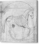 Da Vinci Horse Piaffe Grayscale Canvas Print