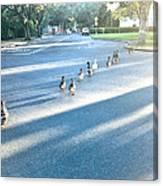 Davis Ducks Canvas Print
