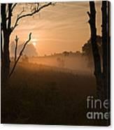 Cannock Chase Dawn Mist Canvas Print