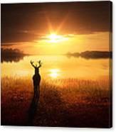 Dawn's Golden Light Canvas Print
