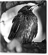 Dax's Bird Canvas Print