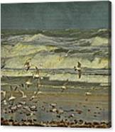 Day For The Birds Canvas Print