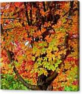 Day Glo Autumn Canvas Print