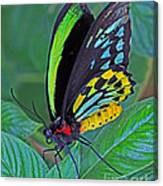 Day-glo Butterfly Canvas Print