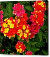 Day Glo Summer Canvas Print