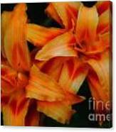 Day Lilies In Soft Focus Canvas Print