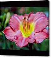 Day Lilly 01 Canvas Print