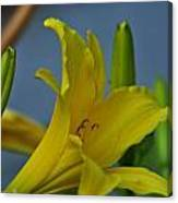 Day Lily 3 Canvas Print