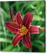 Day Lily 3648 Canvas Print