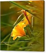 Day Lily Backlit Canvas Print