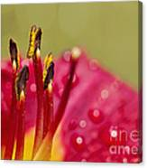 Day Lily Dew Canvas Print