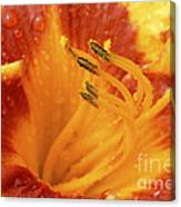 Day Lily In The Rain - 688 Canvas Print