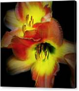 Day Lily On Black Canvas Print